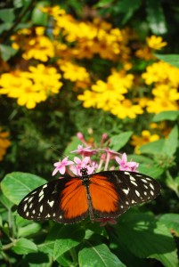 Butterfly Rainforest(1)